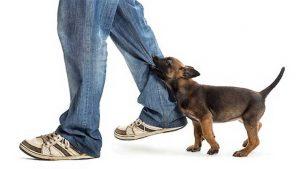 dog-bites-mailman-400-07471430d-300x169